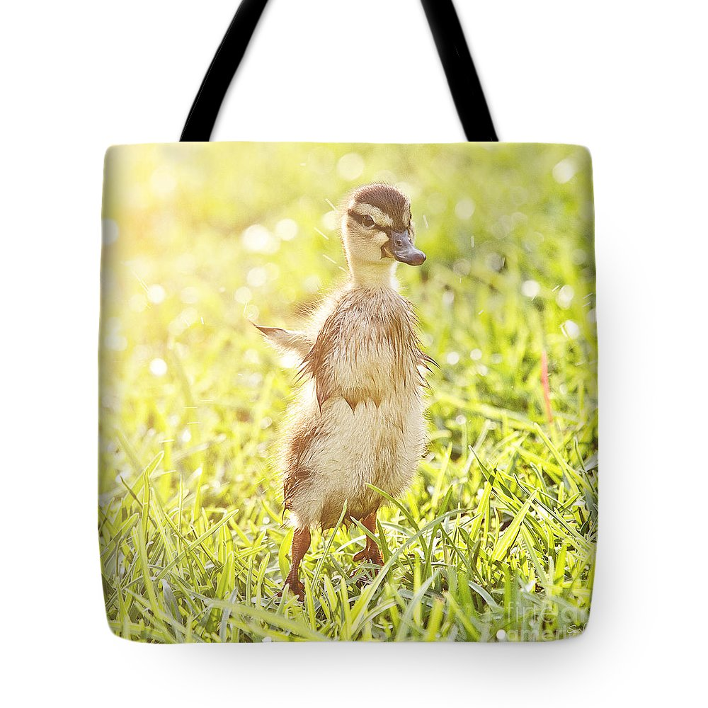 Duckling Tote Bag featuring the photograph Morning Stretch by Scott Pellegrin