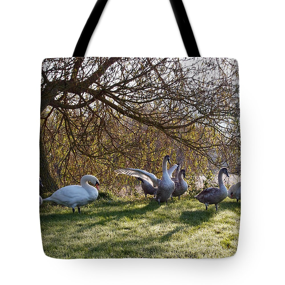 Lower-bruckland Tote Bag featuring the photograph Morning Stretch by Susie Peek