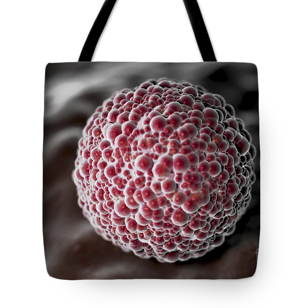 Anatomical Model Tote Bag featuring the photograph Morula 4-6 Days by Science Picture Co