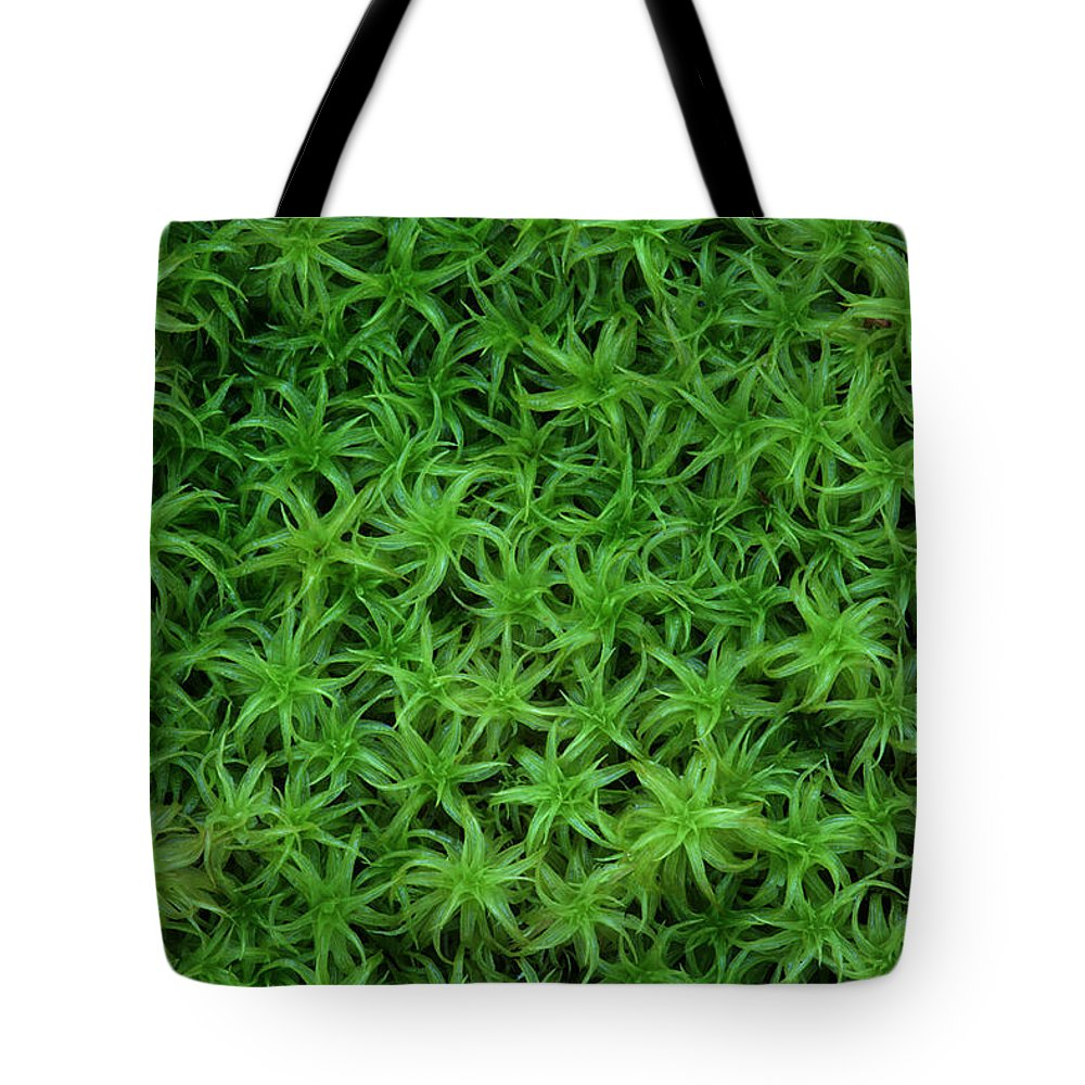 Atrichum Sp. Tote Bag featuring the photograph Moss by Daniel Reed
