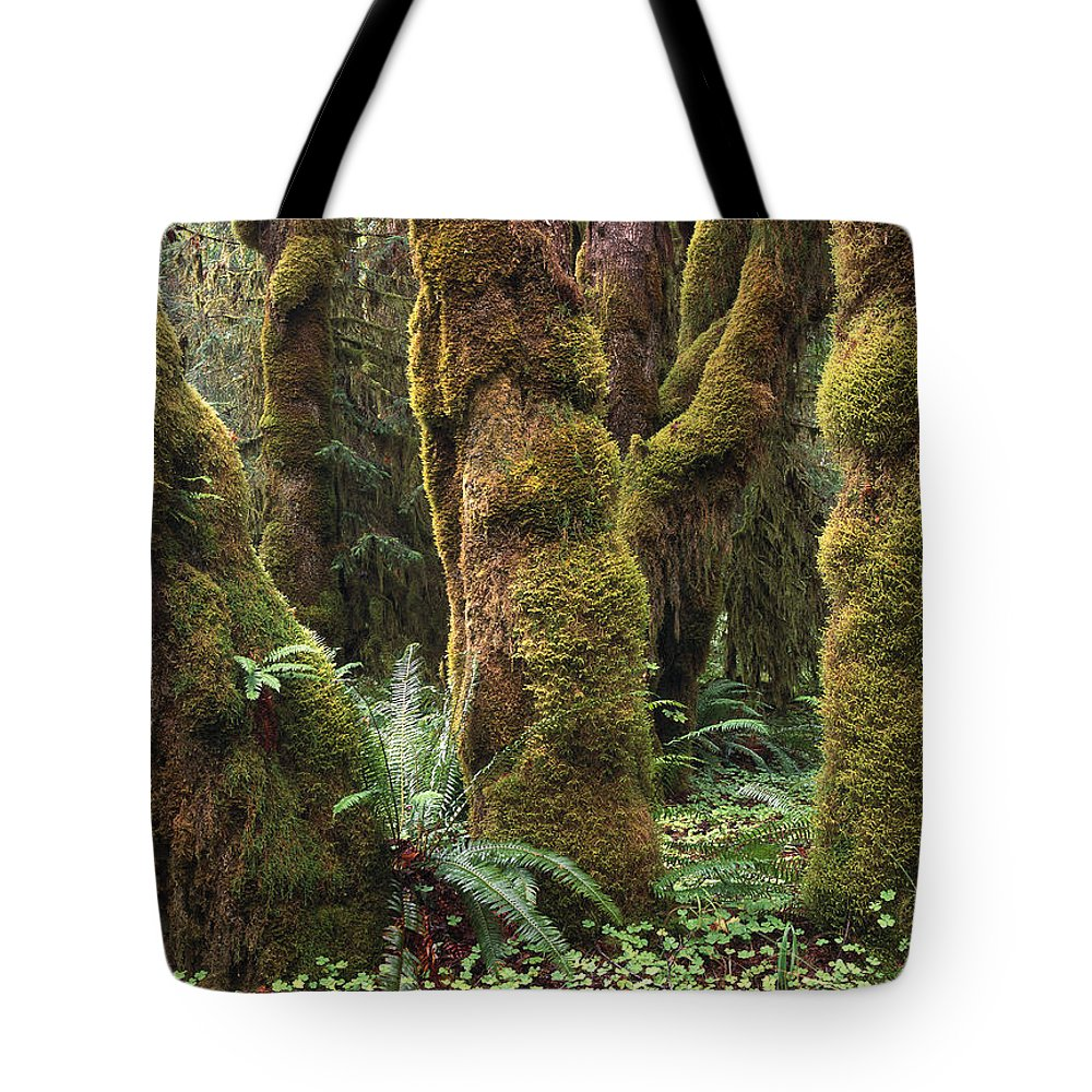 Color Image Tote Bag featuring the photograph Mossy Big Leaf Maples In Hoh Rainforest by Tim Fitzharris