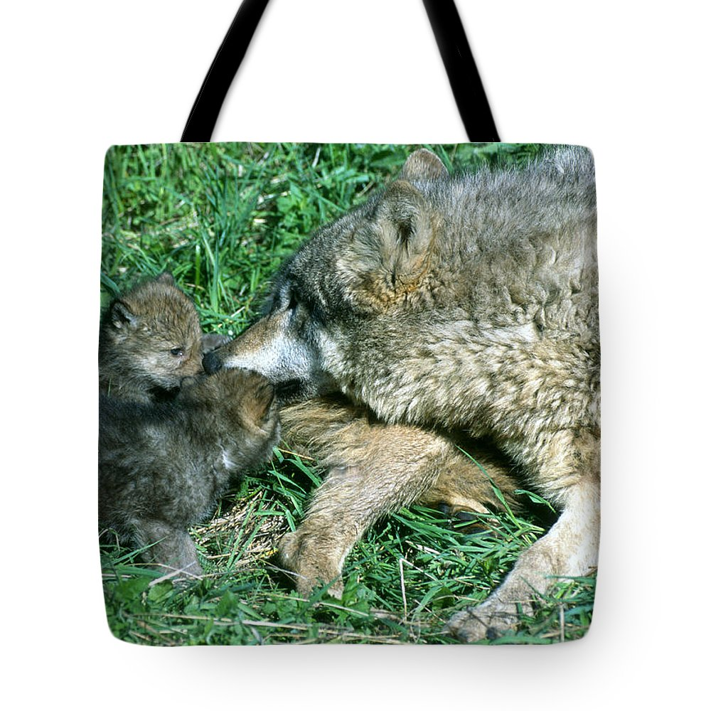 Wolf Tote Bag featuring the photograph Mother Wolf Nuzzles Cubs by Larry Allan