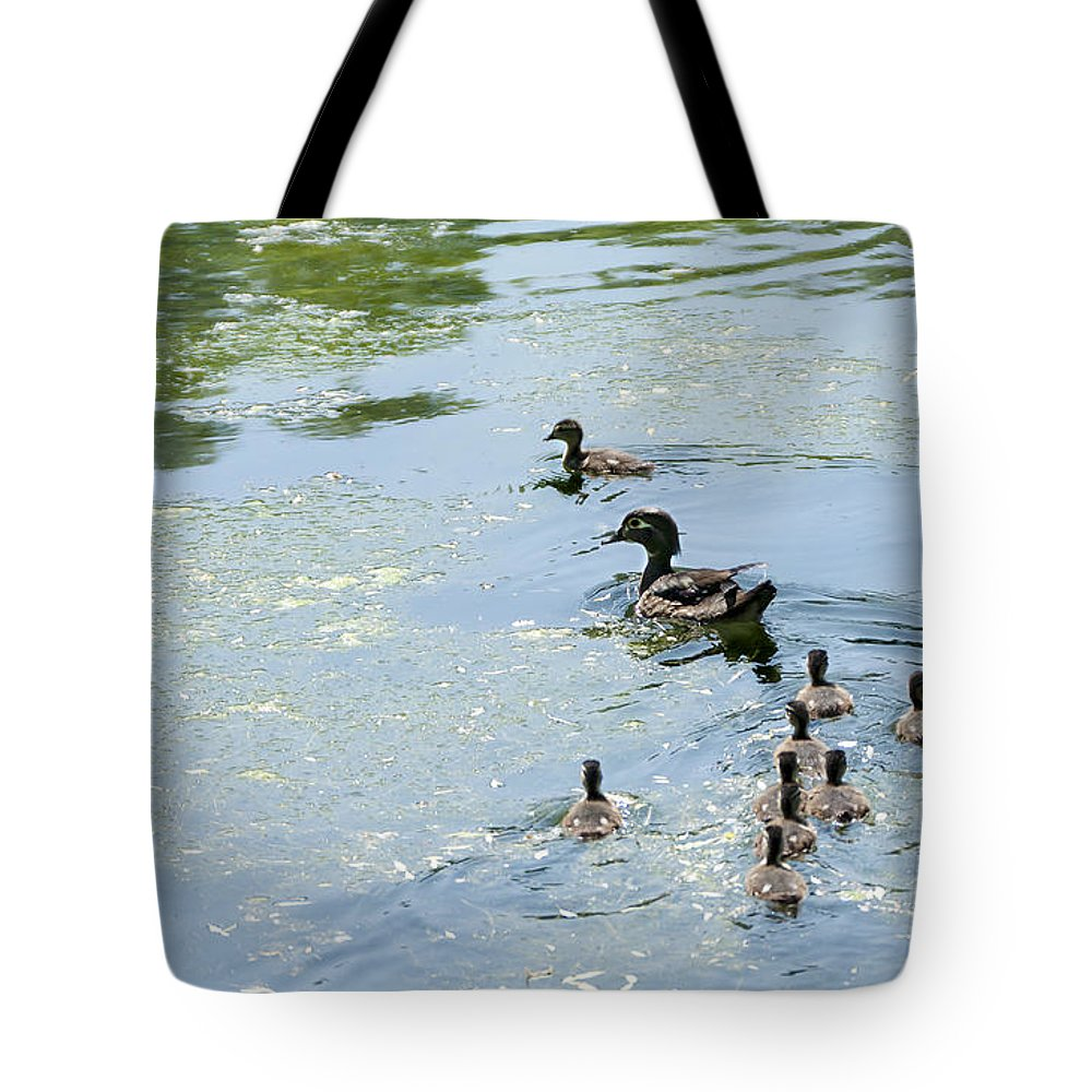 Heron Heaven Tote Bag featuring the photograph Mother Wood Duck by Edward Peterson