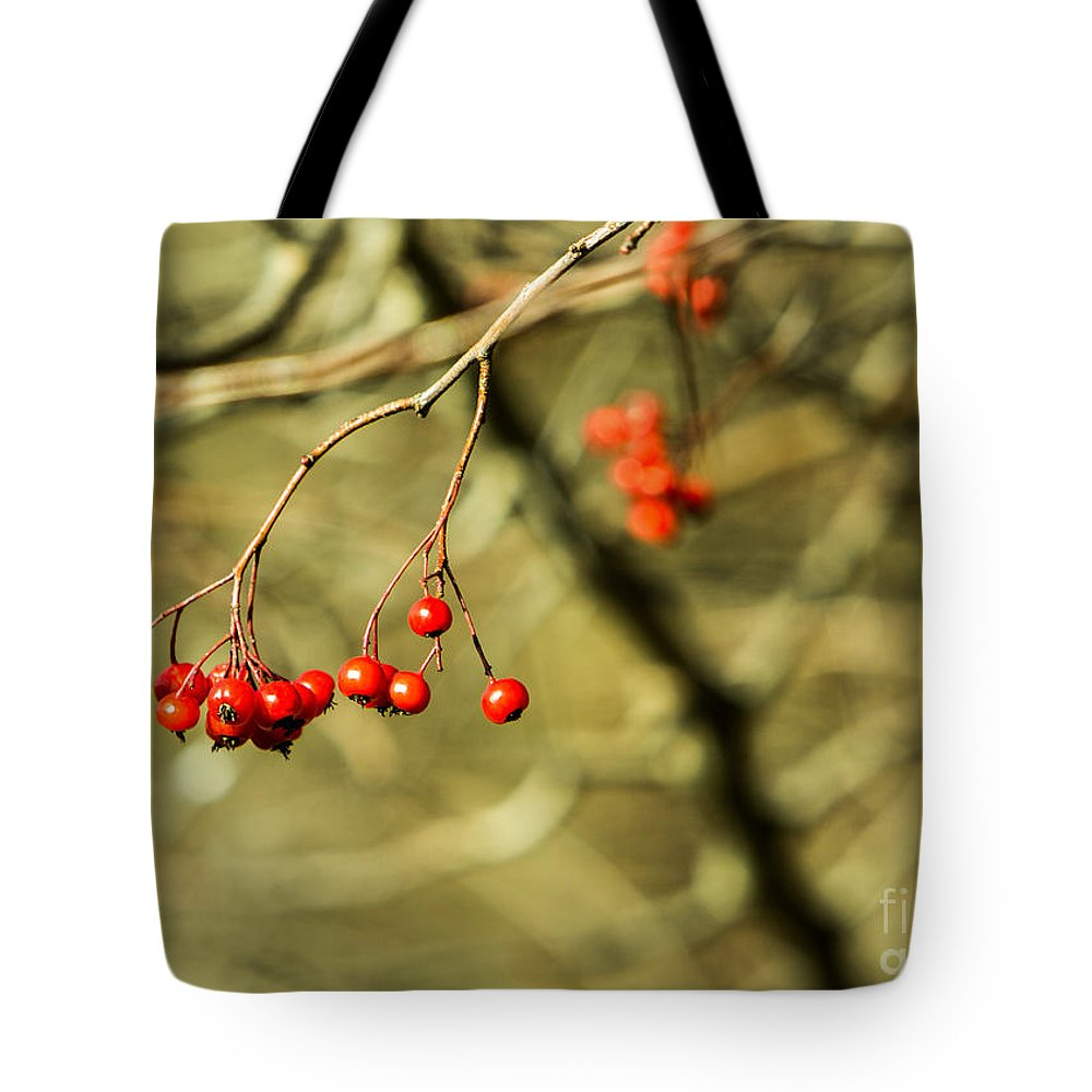 Mountain Tote Bag featuring the photograph Mountain Ash by Brad Marzolf Photography