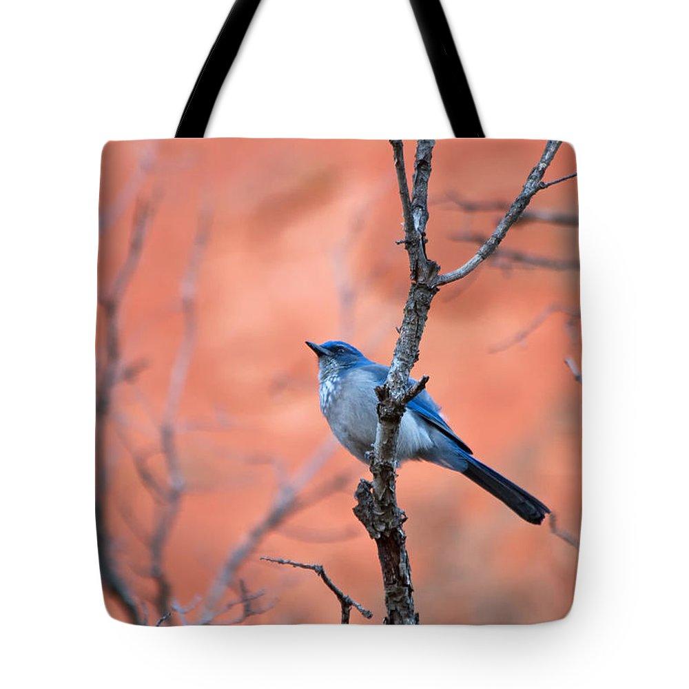 Mountain Blue Bird Tote Bag featuring the photograph Mountain Blue Bird by Ronda Kimbrow