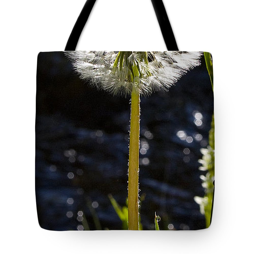 Agoseris Aurantiaca Tote Bag featuring the photograph Mountain Dandelion by J L Woody Wooden