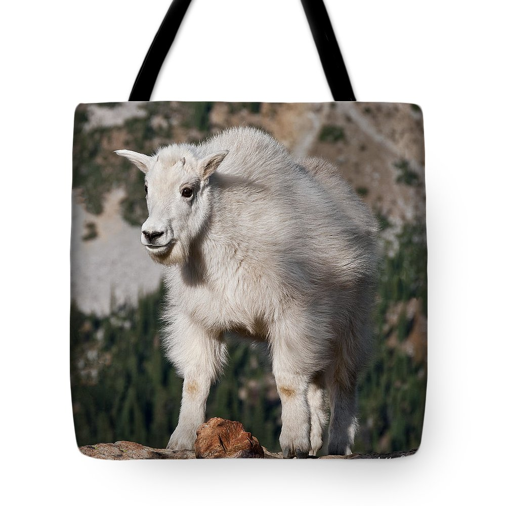 Alpine Tote Bag featuring the photograph Mountain Goat Kid Standing On A Boulder by Jeff Goulden