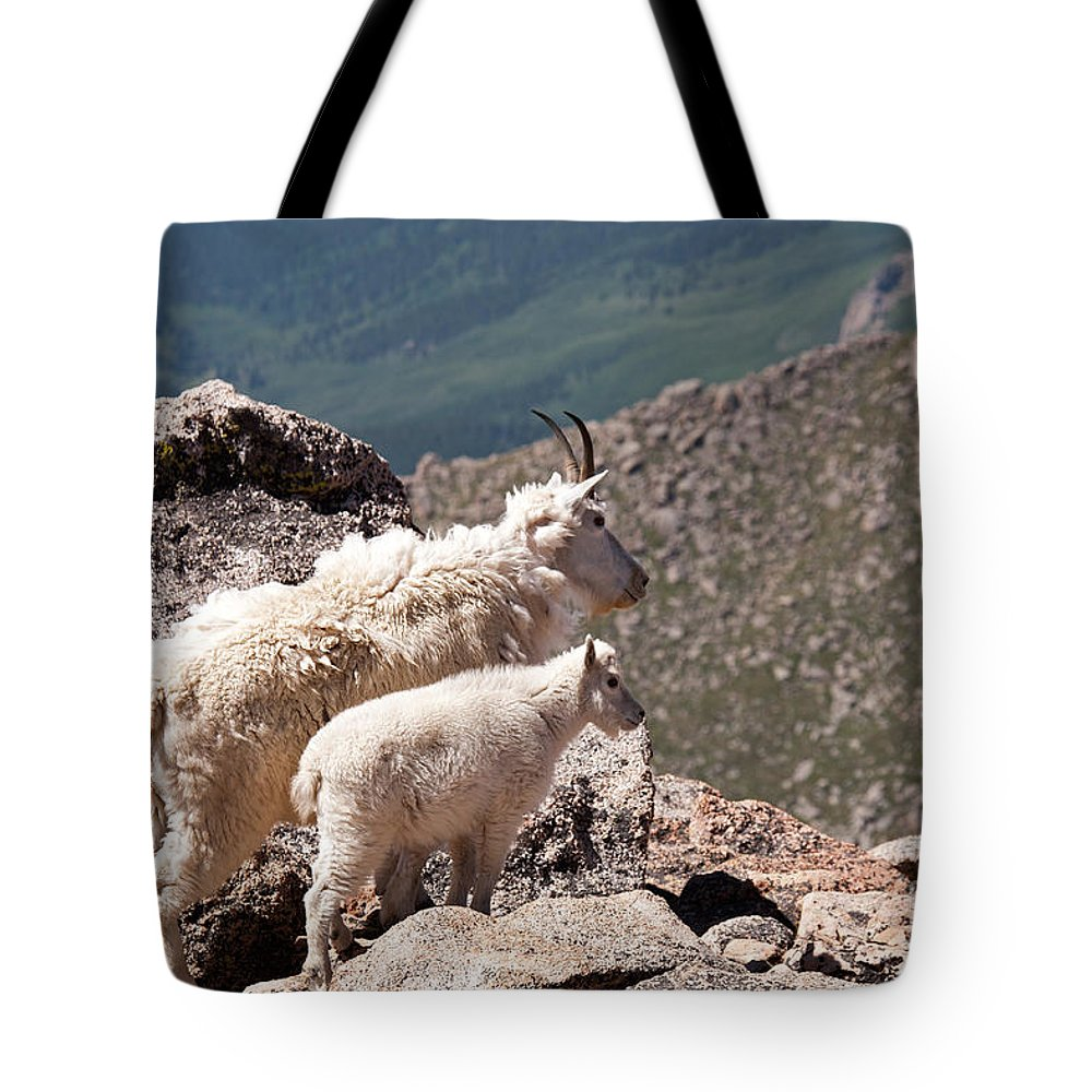 Arapaho National Forest Tote Bag featuring the photograph Mountain Goat Nanny And Kid Enloying The View On Mount Evans by Fred Stearns