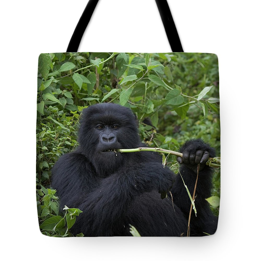 Color Image Tote Bag featuring the photograph Mountain Gorilla Eating Wild Celery by Suzi Eszterhas