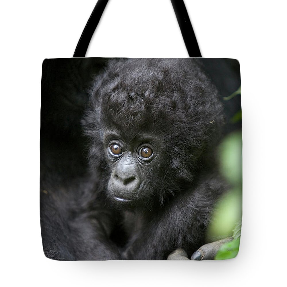 Mp Tote Bag featuring the photograph Mountain Gorilla Infant by Suzi Eszterhas