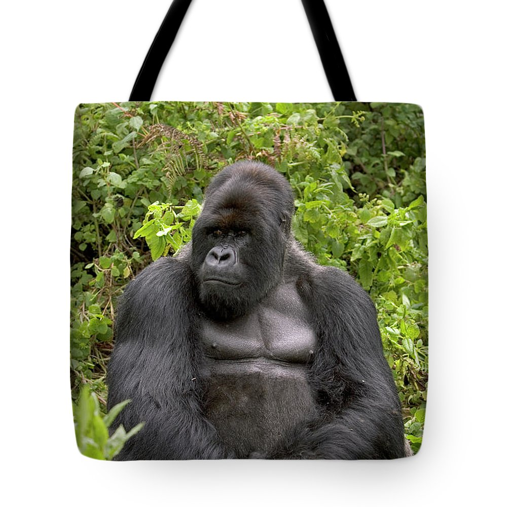 Mp Tote Bag featuring the photograph Mountain Gorilla Silverback by Ingo Arndt
