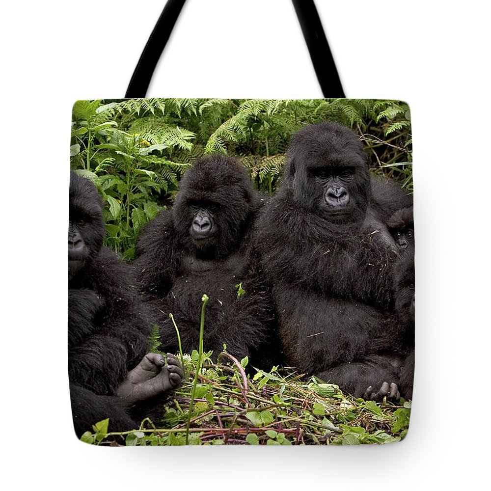 Mp Tote Bag featuring the photograph Mountain Gorilla Susa Group by Ingo Arndt