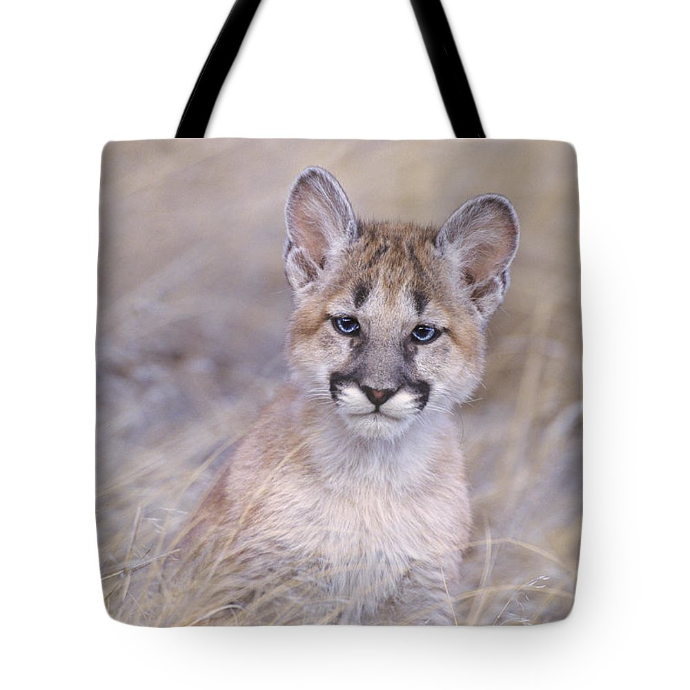 North America; Wildlife; Mammal; Moutain Lion Tote Bag featuring the photograph Mountain Lion Cub In Dry Grass by Dave Welling