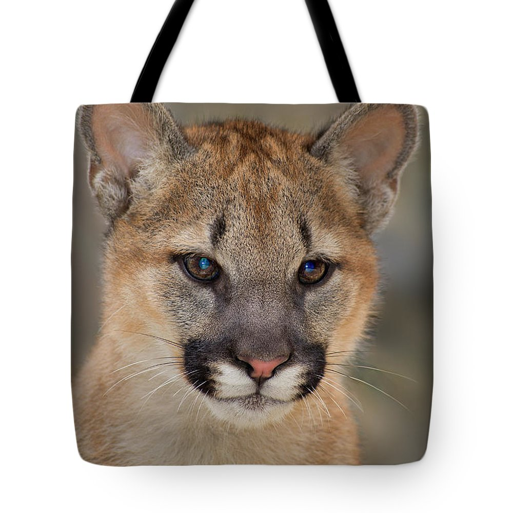 North America Tote Bag featuring the photograph Mountain Lion Felis Concolor Captive Wildlife Rescue by Dave Welling
