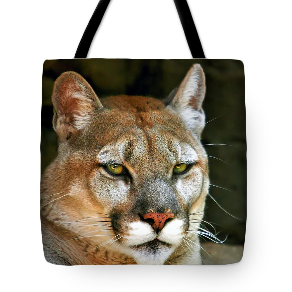 Mountain Lion Tote Bag featuring the photograph Mountain Lion by Mary Almond