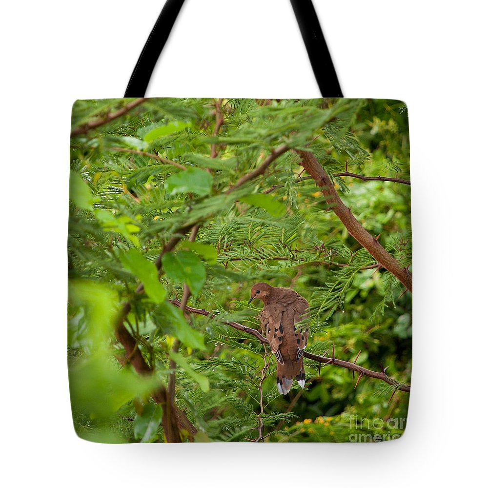 Mourning Tote Bag featuring the photograph Mourning Dove by Luis Alvarenga