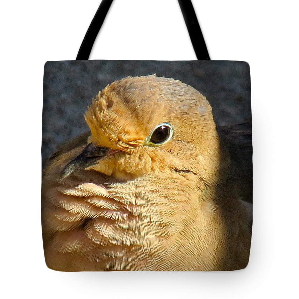 Mourning Dove Tote Bag featuring the photograph Mourning Dove by Shelissa Dawn Savage