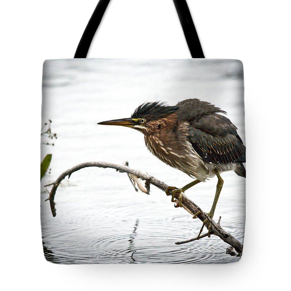 Green Heron Tote Bag featuring the photograph Mr. Green Heron by Cheryl Baxter