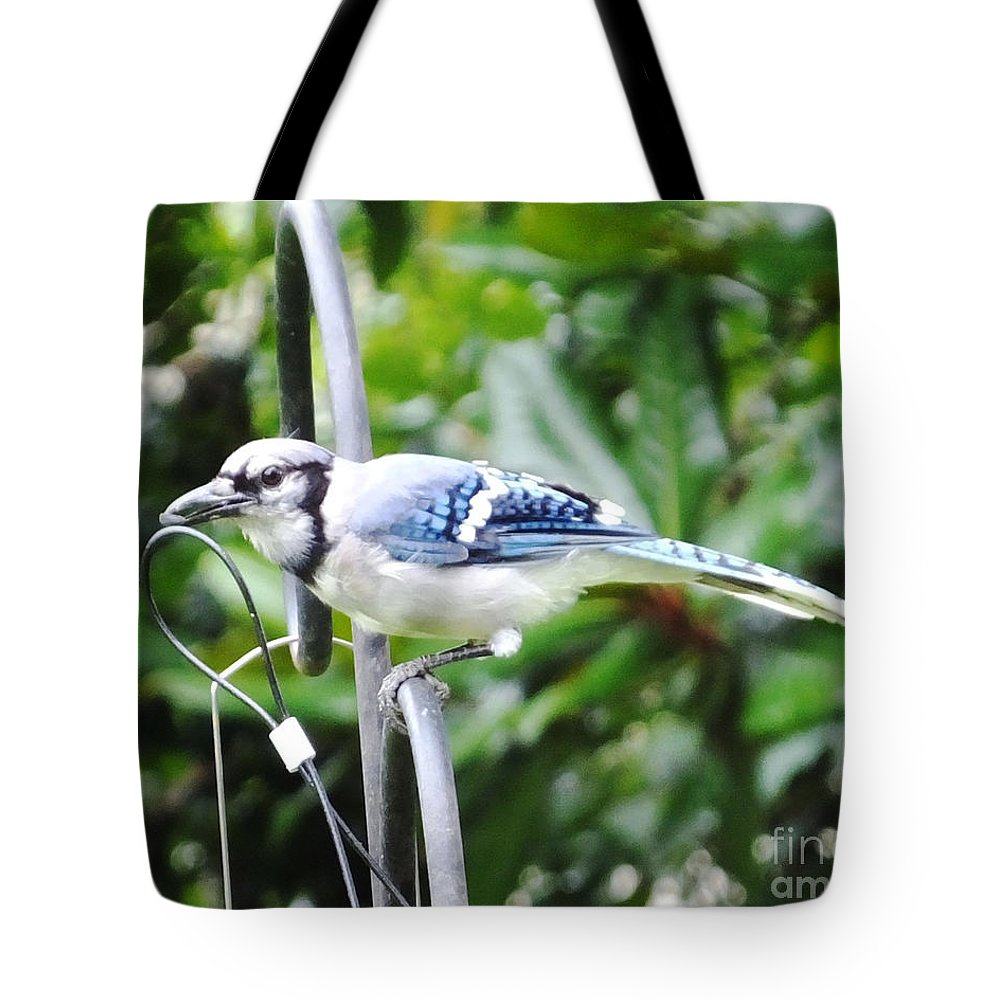 Blue Jay Tote Bag featuring the photograph Mr Jay by Lizi Beard-Ward