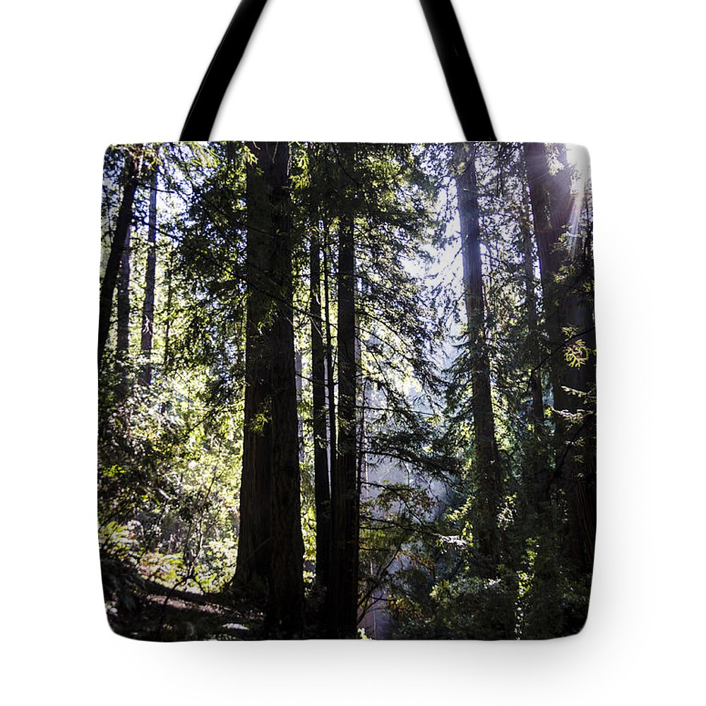 Bay Area Tote Bag featuring the photograph Muir Wood Sunlight by Gej Jones