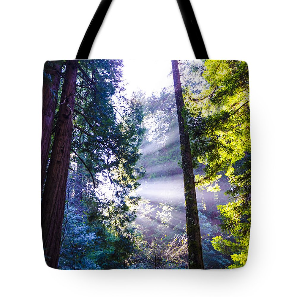 Bay Area Tote Bag featuring the photograph Muir Woods - Fog And Light by Gej Jones