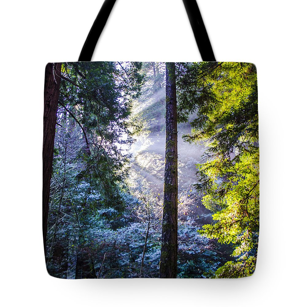 Bay Area Tote Bag featuring the photograph Muir Woods by Gej Jones