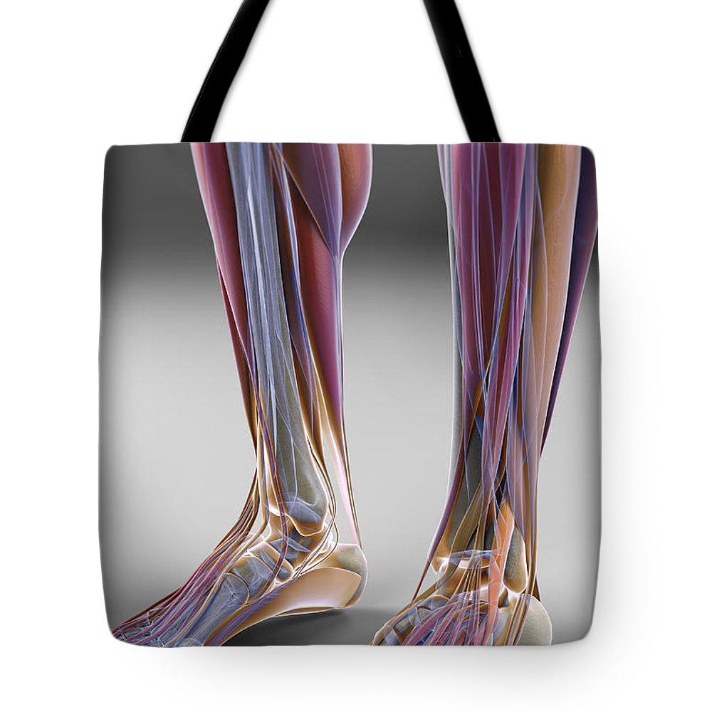 Fibularis Longus Muscle Tote Bags Fine Art America