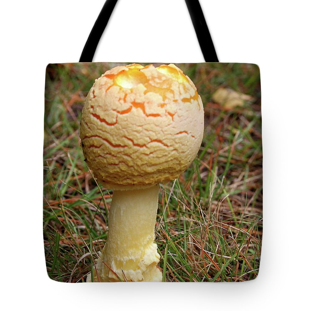 Mushroom Tote Bag featuring the photograph Mushroom by Christiane Schulze Art And Photography