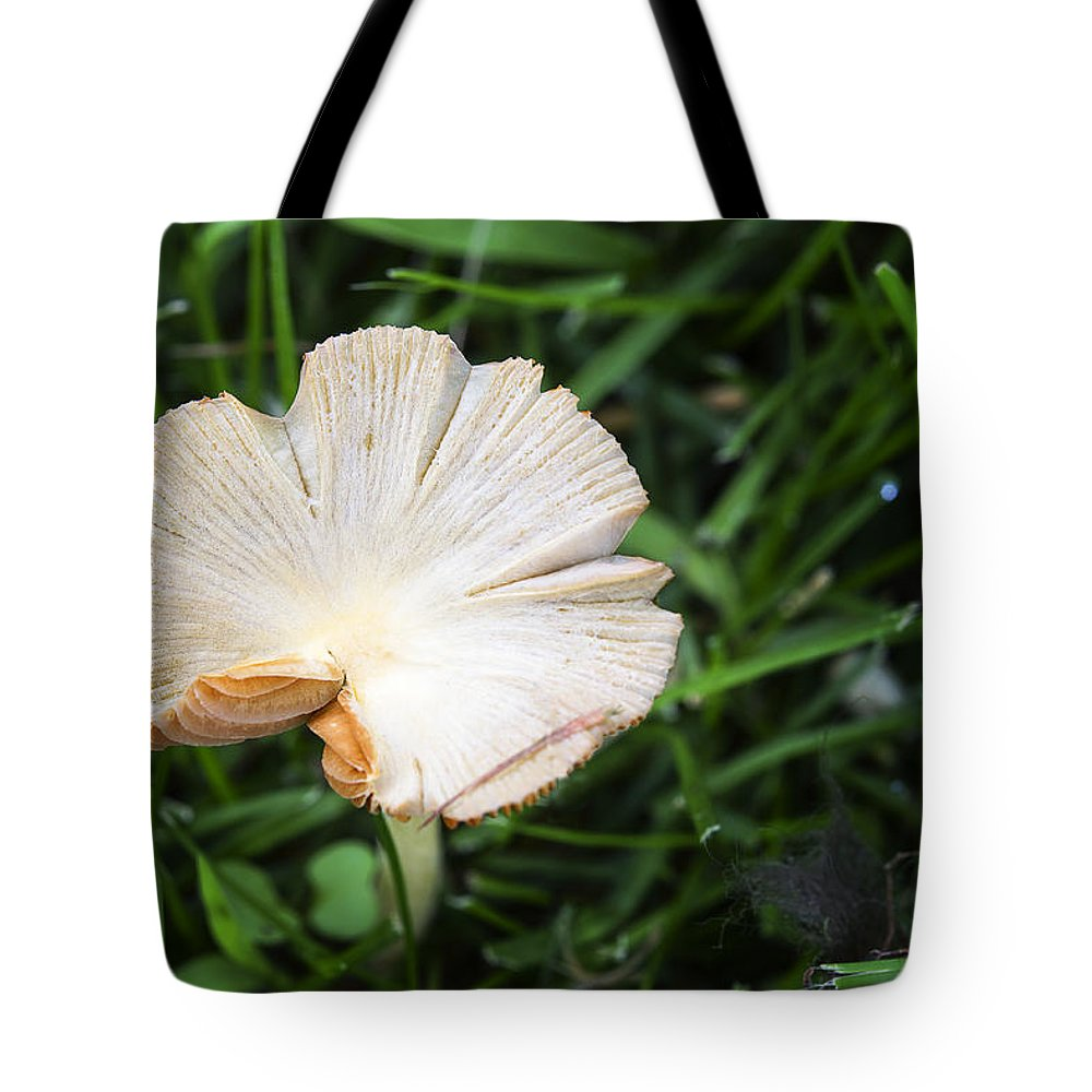 Mushroom Tote Bag featuring the photograph Mushroom Growing Wild On Lawn by Donald Erickson