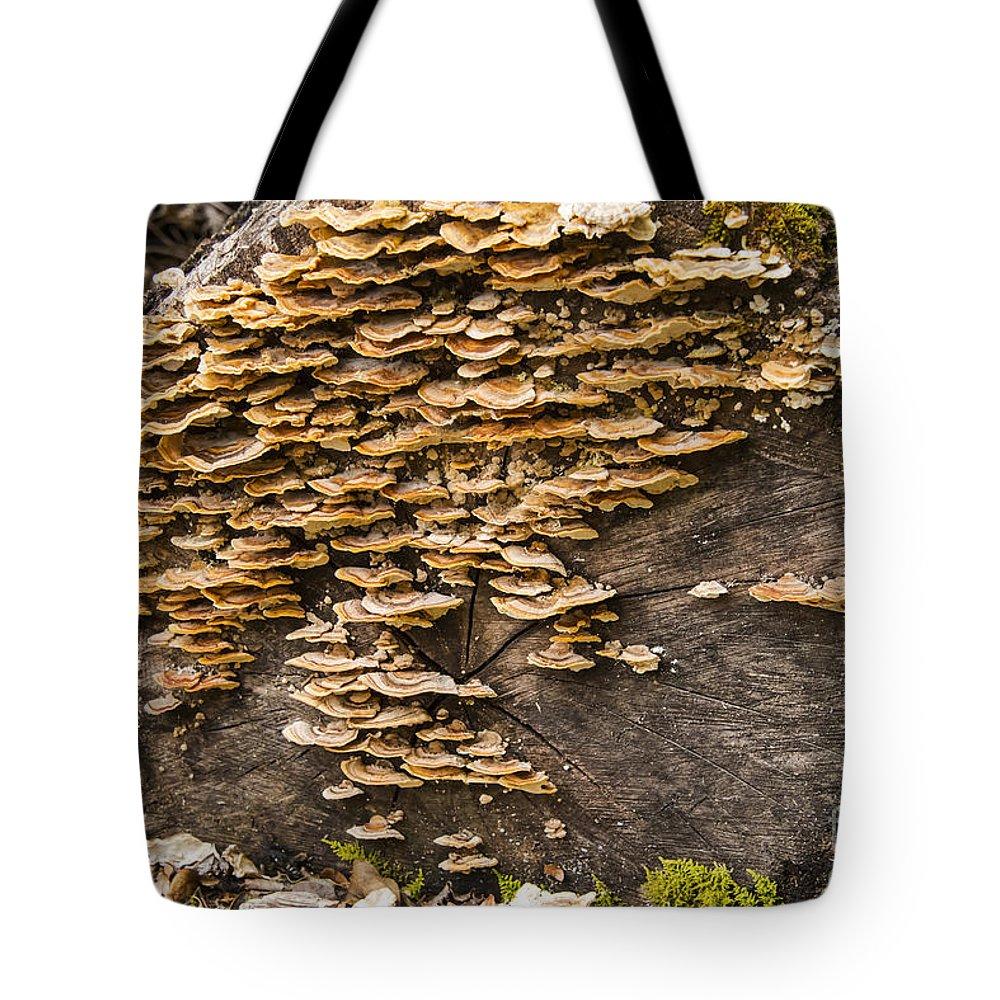 Lake Te Anau New Zealand Mushroom Mushrooms Log Logs Rainforest Rainforests Odds And Ends Tote Bag featuring the photograph Mushroom Log by Bob Phillips