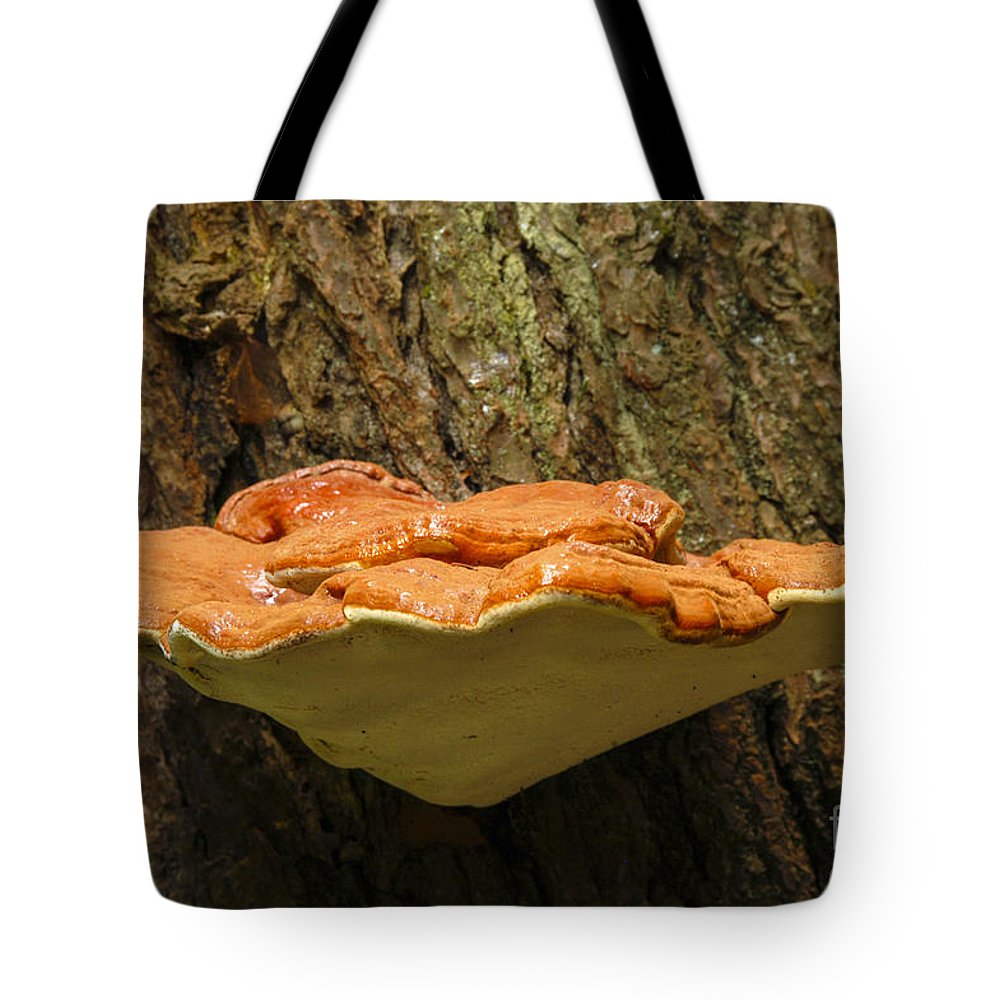 Chicken Of The Woods Mushroom Watkins Glen State Park New York Mushrooms Nature Food Fungi Fungus Tote Bag featuring the photograph Mushroom Plate by Bob Phillips