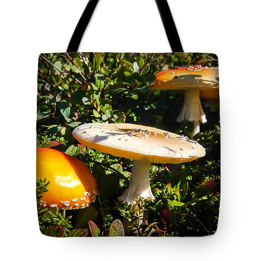 Mushroom Tote Bag featuring the photograph Mushroom Tops by William Krumpelman