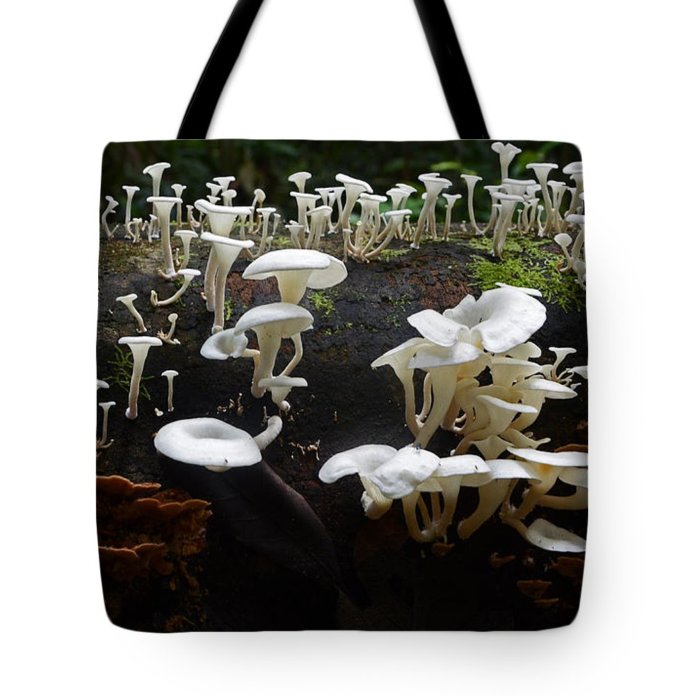 Mushrooms Tote Bag featuring the photograph Mushrooms Amazon Jungle Brazil 5 by Bob Christopher