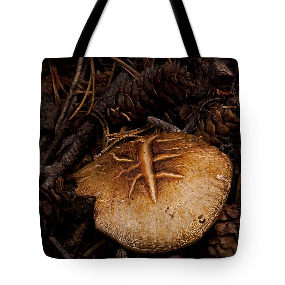 Mushrooms And Pine Combs Tote Bag featuring the photograph Mushrooms And Pine Combs  #3659 by J L Woody Wooden