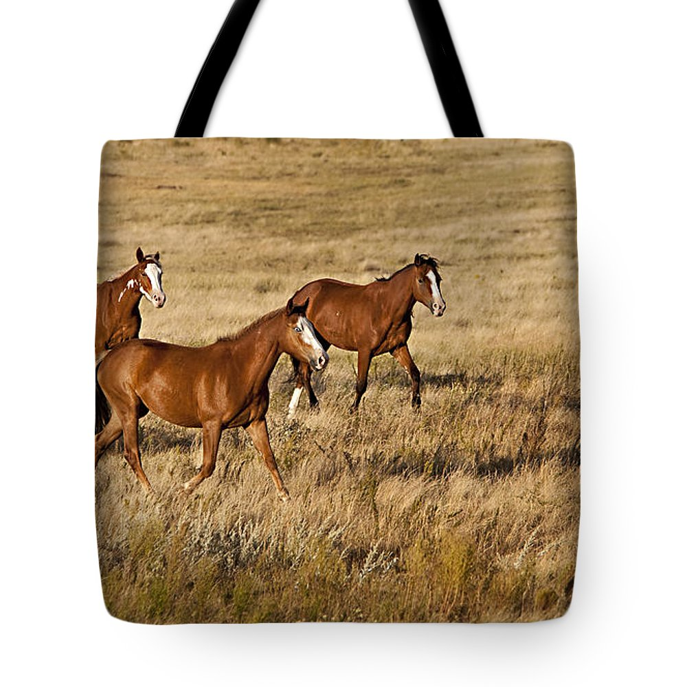 Horse Tote Bag featuring the photograph Musketeers by Jack Milchanowski