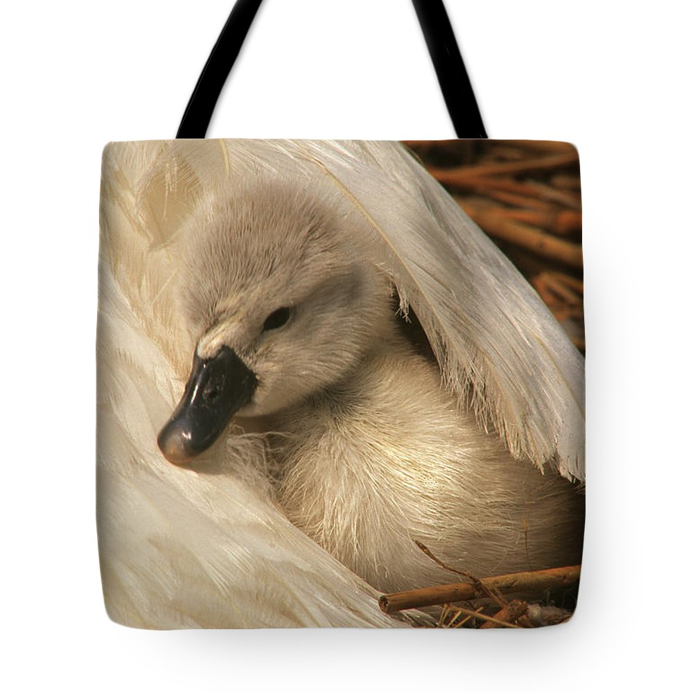 Fn Tote Bag featuring the photograph Mute Swan Cygnet Under Wing by Flip De Nooyer