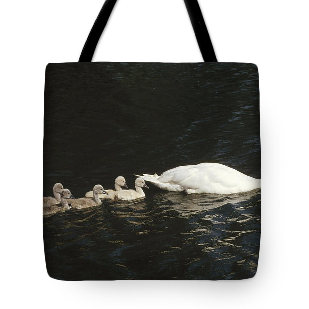 Chick Tote Bag featuring the photograph Mute Swan Cygnus Olor Parent by Konrad Wothe