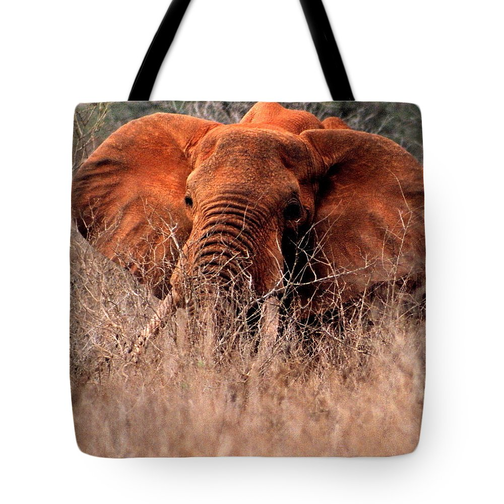 Wild Elephant Tote Bag featuring the photograph My Elephant In Africa by Phyllis Kaltenbach