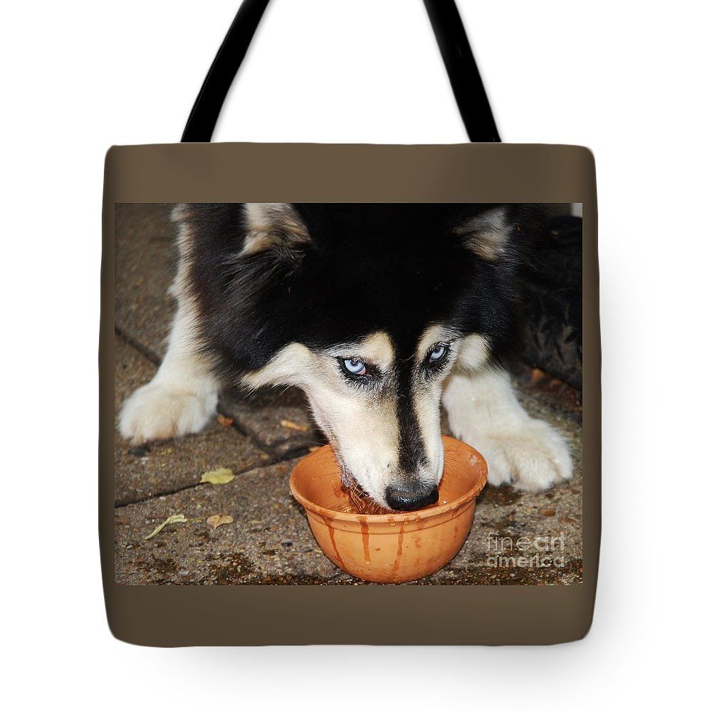 Animal Portrait Canine Art Siberian Husky Tasha Blue Eyes Possessive Expression Drinking Water Pet Movement Dog Close Up Wood Print Canvas Print Metal Frame Poster Print Available On Greeting Cards T Shirts Tote Bags Pouches Throw Pillows Phone Cases And Mugs Tote Bag featuring the photograph My Water by Marcus Dagan