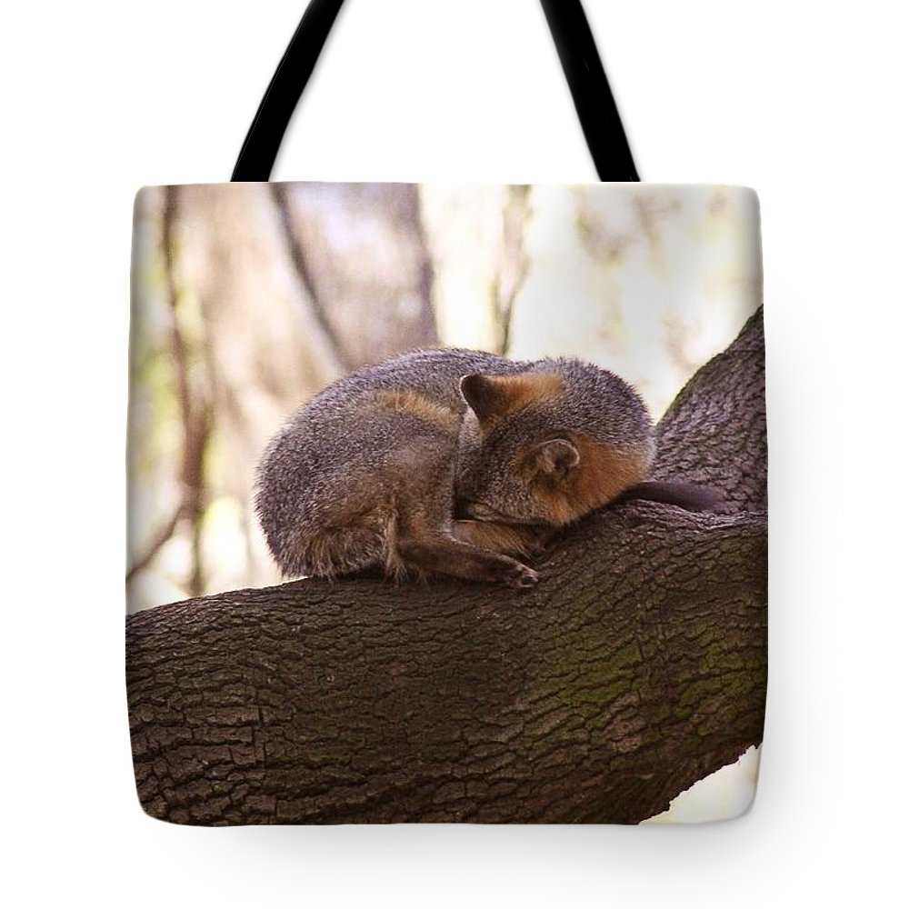 Animal Tote Bag featuring the photograph Nap Time by Jessica Brown