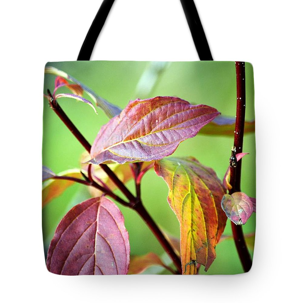 Still Life Tote Bag featuring the photograph Natural Still Life In November by Karen Majkrzak