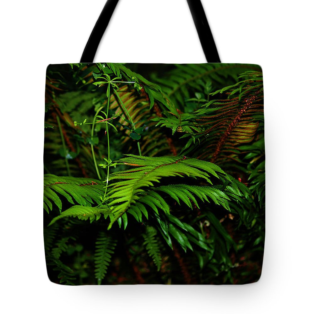 Capitol Forest Tote Bag featuring the photograph Nature In The Pacific Nw by Jeanette C Landstrom