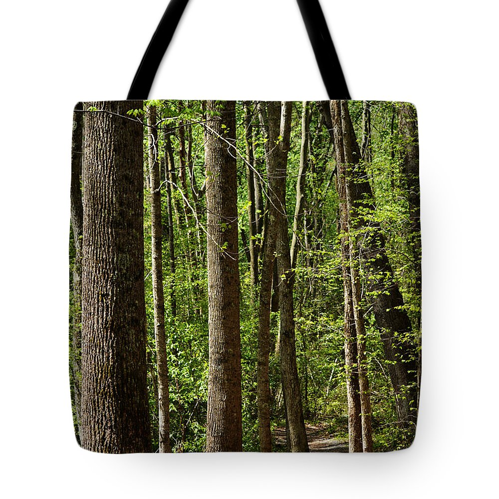 Battle Creek Cypress Swamp Tote Bag featuring the photograph Nature Walk Early Spring by Rebecca Sherman