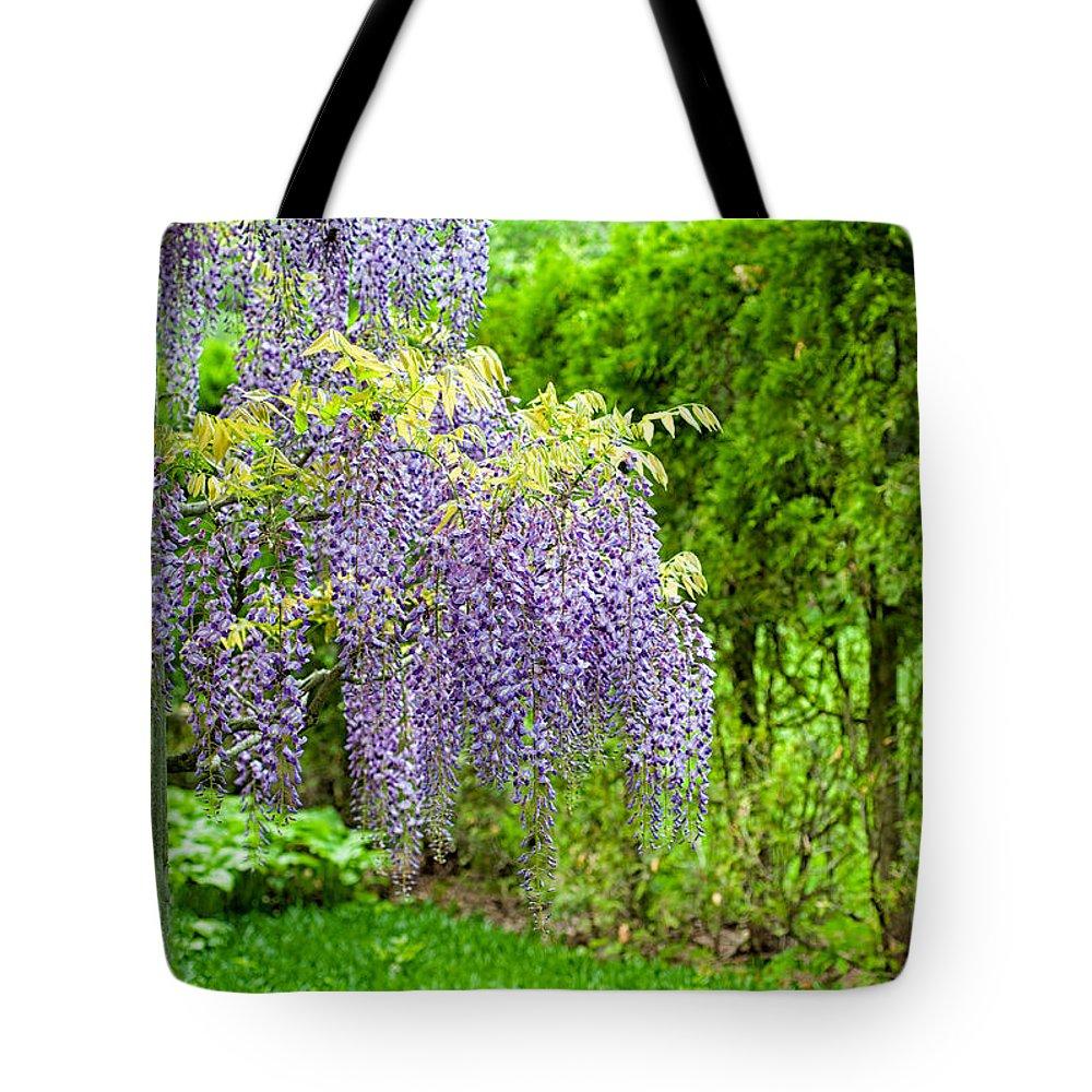 Japanese Wisteria Tote Bag featuring the photograph Nature's Waterfalls By Zina Zinchik by Zina Zinchik