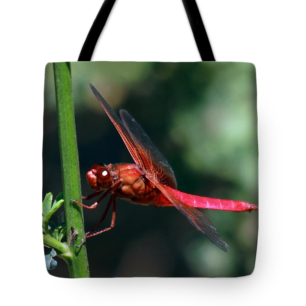 Nature Tote Bag featuring the photograph Neon Skimmer by David Salter