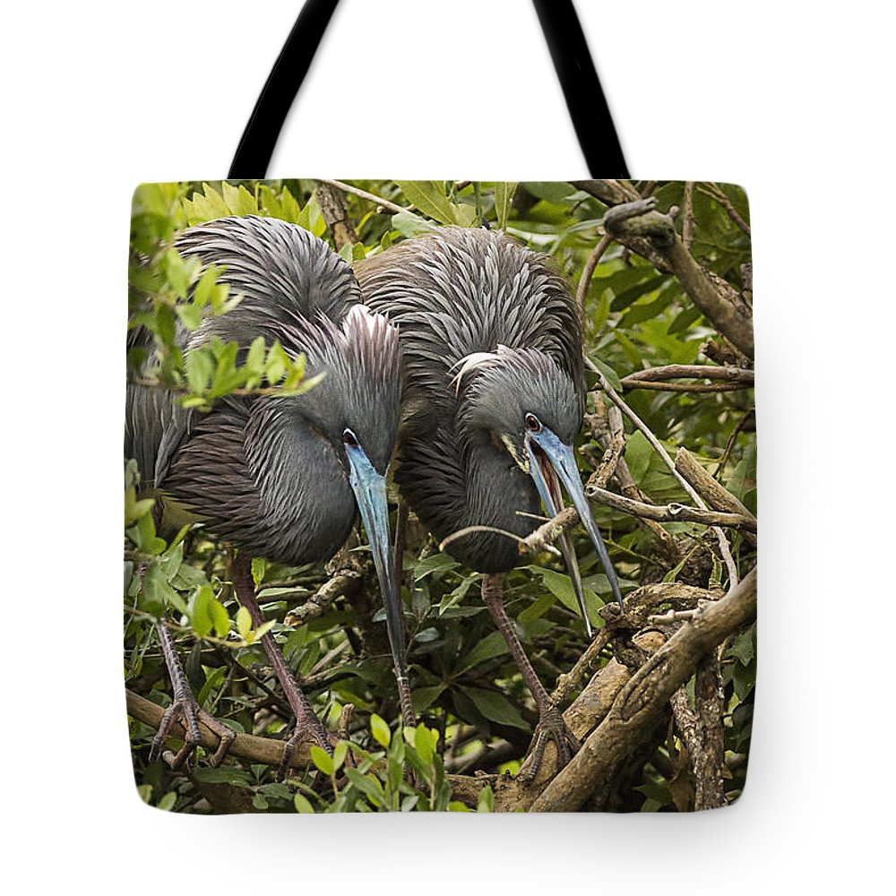 Little Blue Herons Tote Bag featuring the photograph Nest Building by Priscilla Burgers