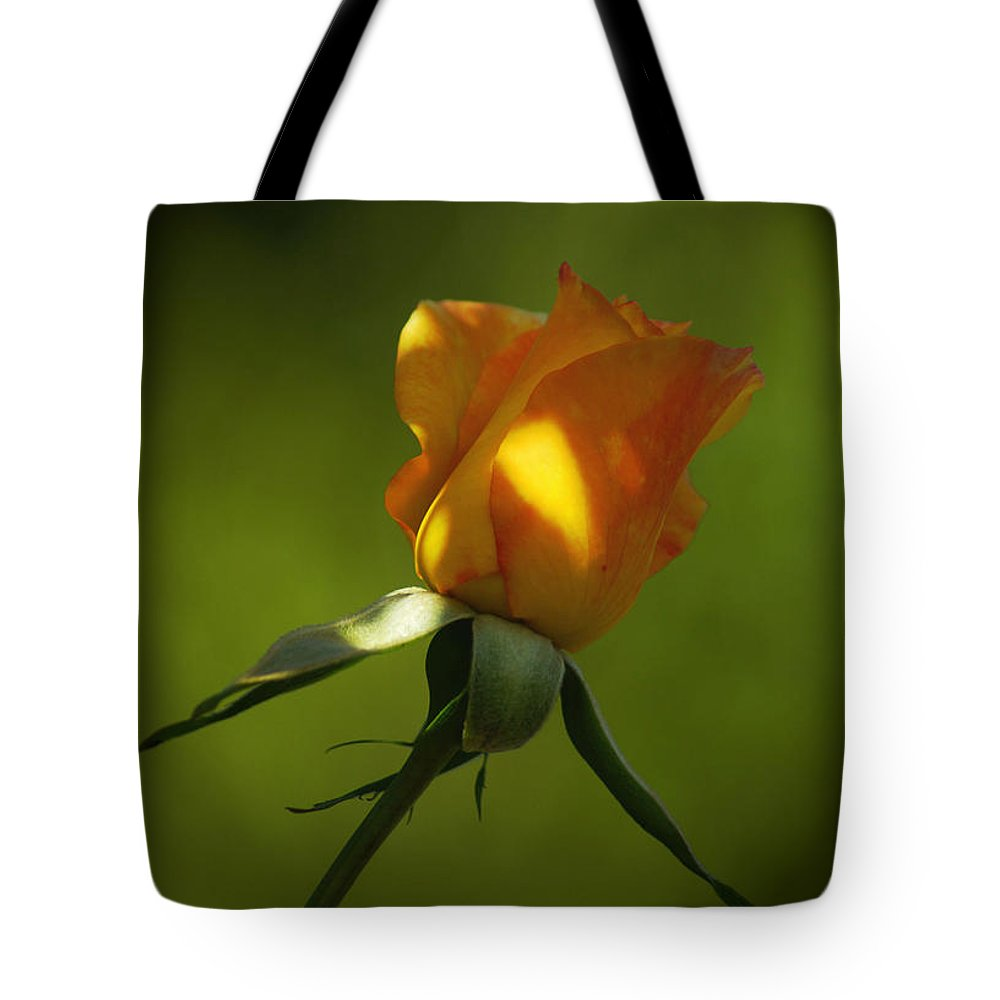 Rose Tote Bag featuring the photograph Never Lose Your Love by Lorenzo Williams
