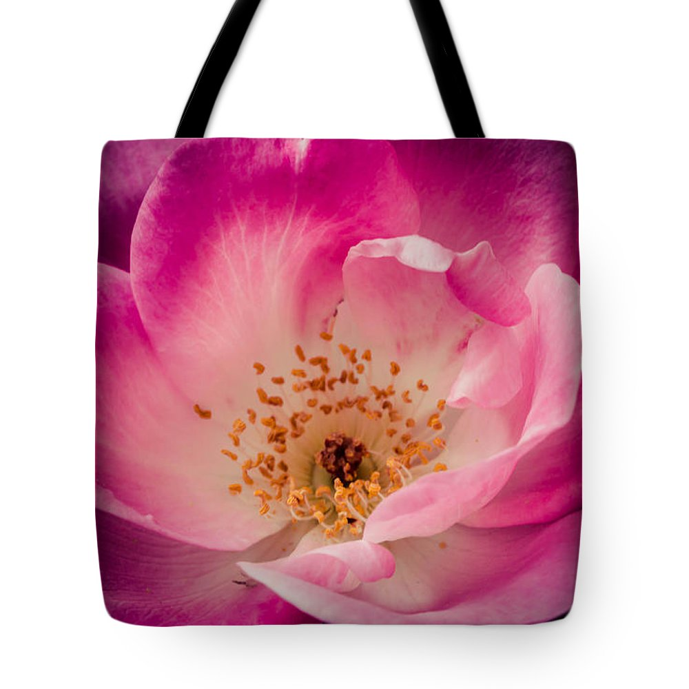 Rose Tote Bag featuring the photograph New Beginnings by Sara Frank