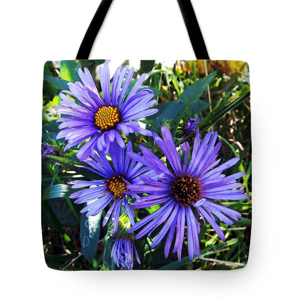 Purple Asters Tote Bag featuring the photograph New England Aster by Shawna Rowe