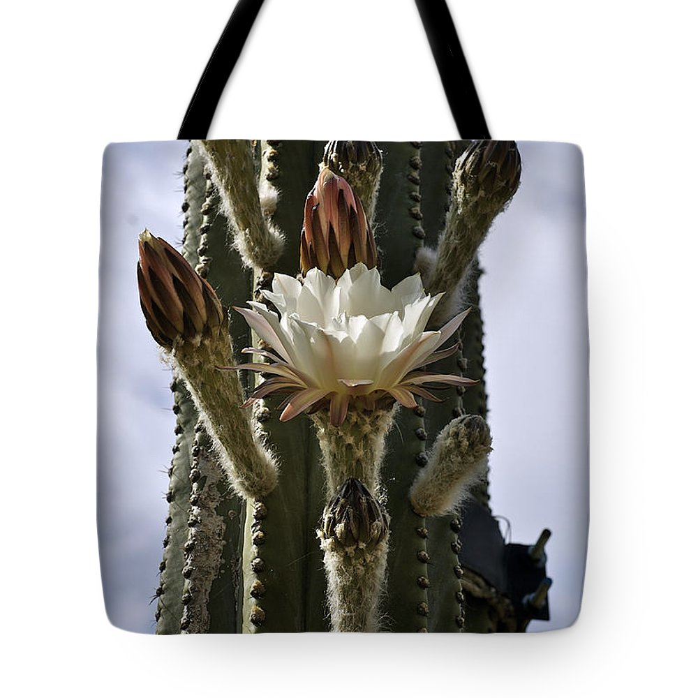 Cactus Tote Bag featuring the photograph New Photographic Art Print For Sale White Cactus Flower by Toula Mavridou-Messer